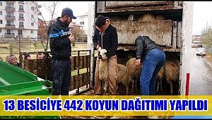 AKSARAY'DA 13 BESİCİYE 442 KOYUN DAĞITIMI YAPILDI