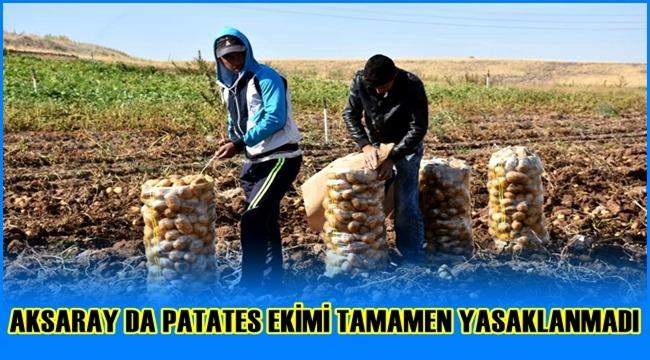 AKSARAY DA PATATES EKİMİ TAMAMEN YASAKLANMADI