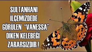 """SULTANHANI İLÇEMİZDEDE GÖRÜLEN """"VANESSA"""" DİKEN KELEBEĞİ ZARARSIZDIR"""